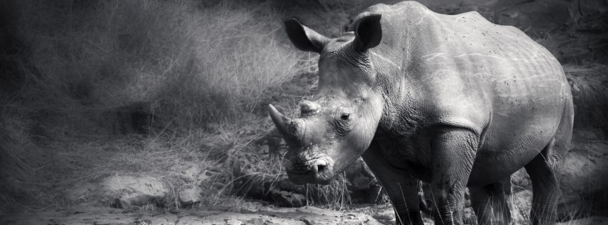 Black-And-White-Rhino-315x851