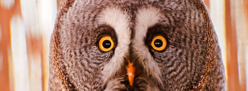 Vogel-True-Owl-Great-Grey-Owl-315x851