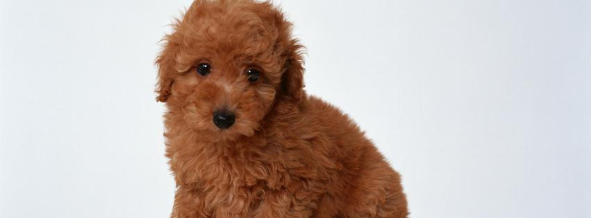 animals-animal-world-dogs-puppies-851x315-54017