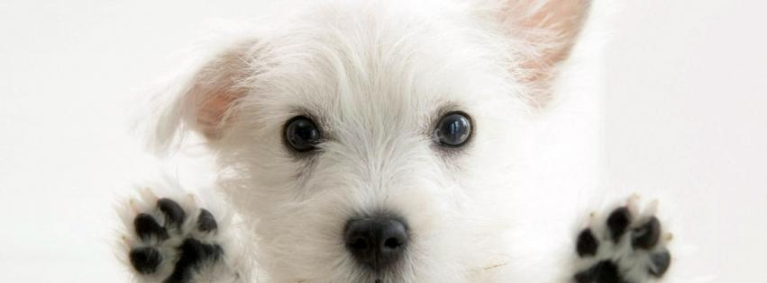 animals-dogs-pets-puppies-white-background-851x315-79674