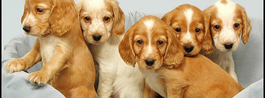 dogs-pets-puppies-851x315-88217