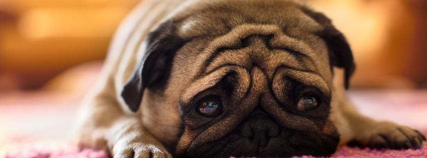 dogs-puppies-sad-851x315-59308