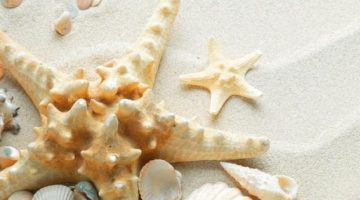 sand-starfish-seashells-white-851x315-9534