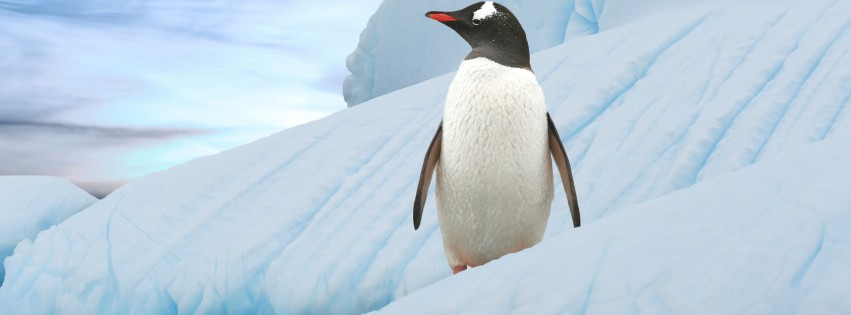 Ice-Penguin-315x851