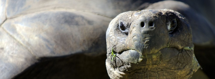 Lonesome-George-Portrait-315x851