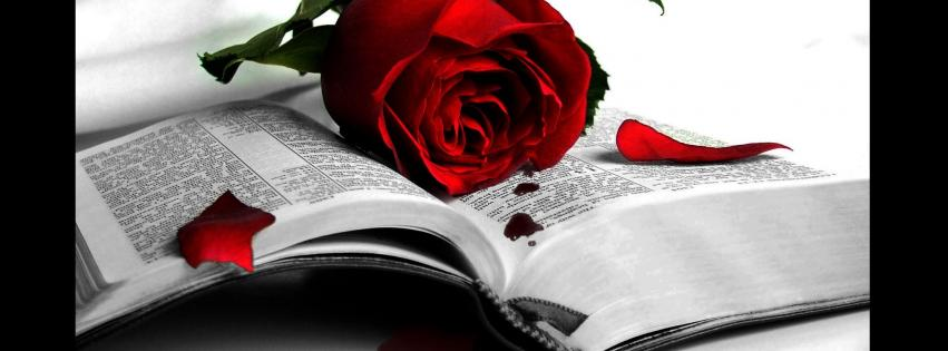 flowers-books-artwork-roses-red-rose-851x315-27815