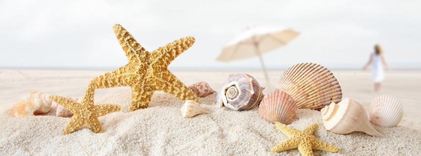 beach-sand-starfish-seashells-depth-of-field-umbrellas-851x315-9497