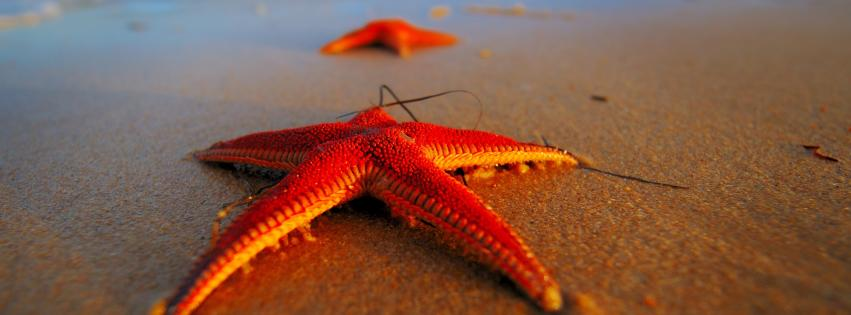 beach-starfish-851x315-27042