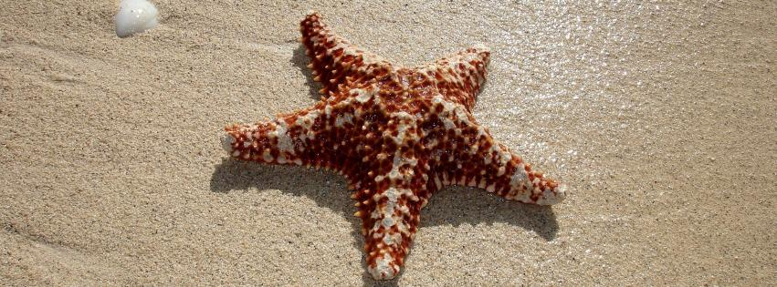 beach-starfish-851x315-44591