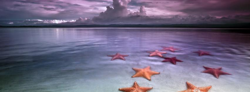 beaches-landscapes-starfish-851x315-88620
