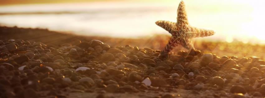 nature-beach-starfish-sea-shorelines-851x315-26465