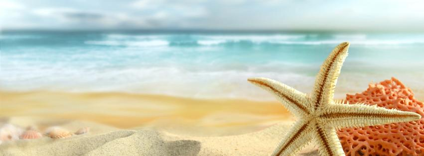 ocean-beach-sand-stars-starfish-sea-851x315-11133
