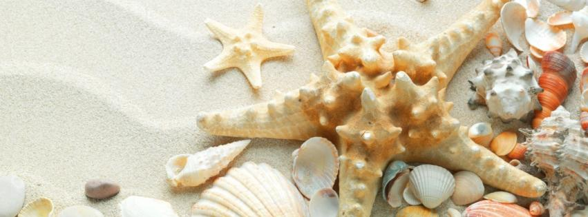 sand-shells-starfish-851x315-15261